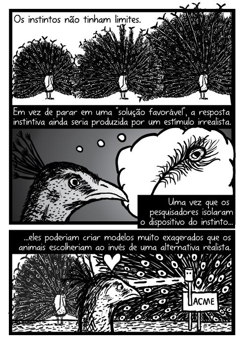Penas de pavão cartoon. Peacock desenho da cauda. Em vez de parar em uma