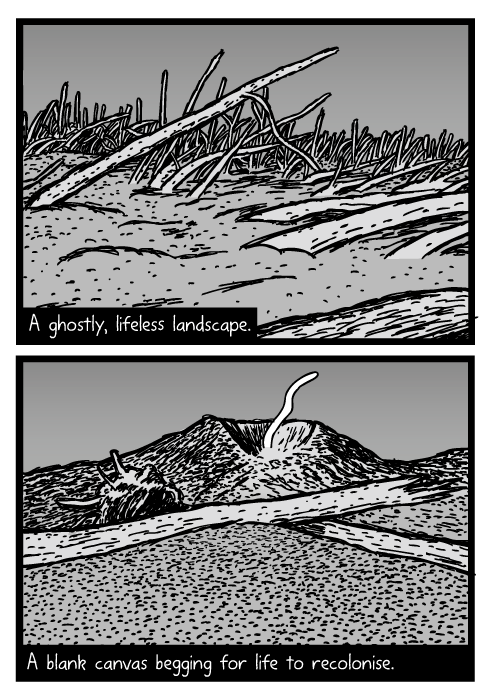 Mount St. Helens cartoon. Fallen tree trunks in volcanic ash drawing. Blowdown area. A ghostly, lifeless landscape. A blank canvas begging for life to recolonise.