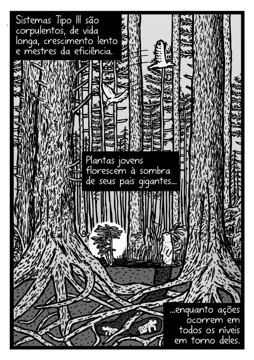 Cartum de floresta depinheiro. Desenho do ecosistema transversal de Redwood. Sistemas Tipo III são corpulentos, de vida longa, crescimento lento e mestres da eficiência. Plantas jovens florescem à sombra de seus pais gigantes...enquanto ações ocorrem em todos os níveis em torno deles.