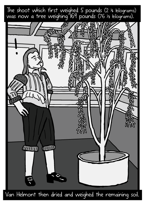 Jean Baptista van Helmont cartoon. Van Helmont willow tree drawing. The shoot which first weighed 5 pounds (2 ¼ kilograms) was now a tree weighing 169 pounds (76 ½ kilograms). Van Helmont then dried and weighed the remaining soil.
