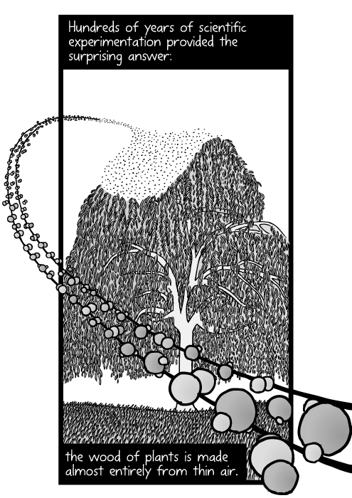Drawing of tree carbon hydrogen oxygen atoms. Carbon dioxide molecules. Hundreds of years of scientific experimentation provided the surprising answer: the wood of plants is made almost entirely from thin air.