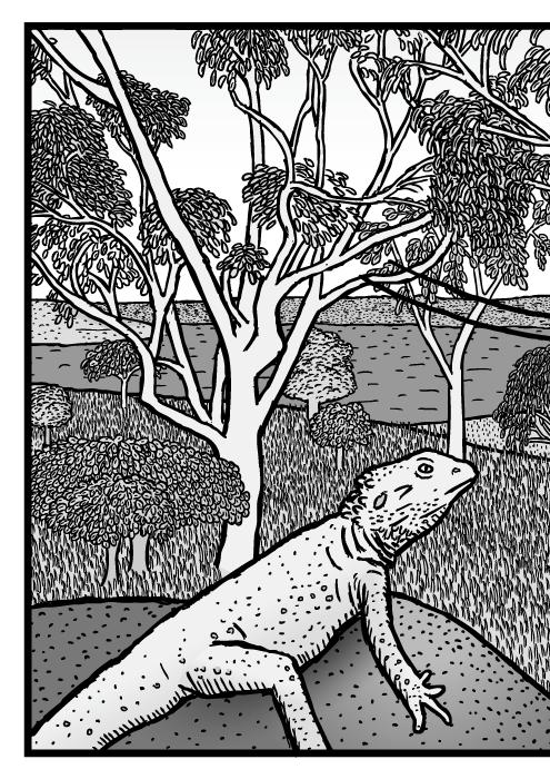 Australian bushland scene drawing. Eucalyptus trees cartoon. Gum tree Bearded Dragon lizard comic.