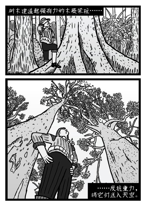 人站在树下的仰视图。卡通树干。树木建造起强有力的木质梁柱…… ……反抗重力,将它们送入天空。