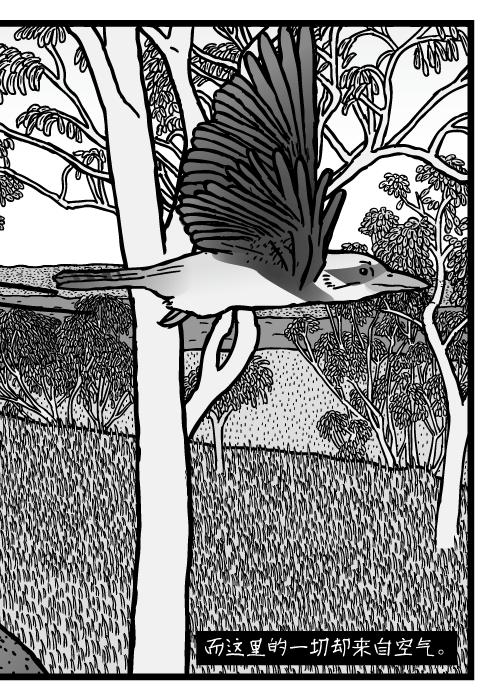 澳洲丛林景象。桉树,尤加利树。翠鸟。而这里的一切却来自空气。