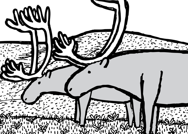 Caribou drawing line art. Reindeer cartoon black and white.