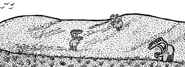 Sparesley populated pasture of St Matthew Island. Three reindeer grazing.
