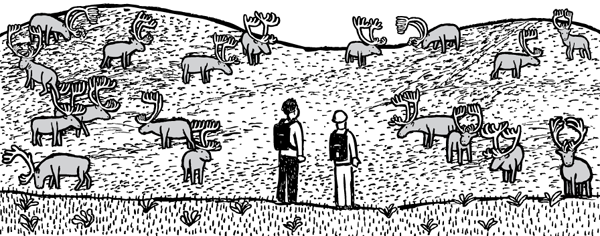 Researchers looking at many cartoon reindeer grazing. St Matthew Island comic by Stuart McMillen.