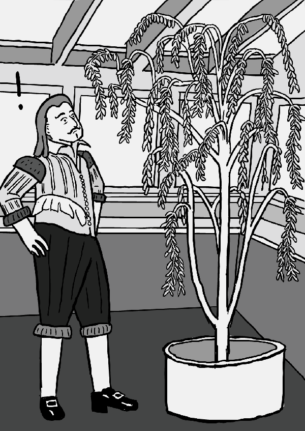 van Helmont stands next to willow tree cartoon. Black and white drawing.