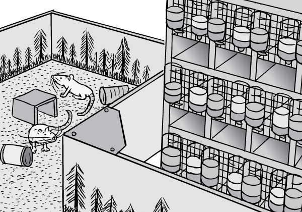 Drawing of Rat Park Canadian addiction experiment enclosure next to racks of caged laboratory rats. Cartoon science experiment.