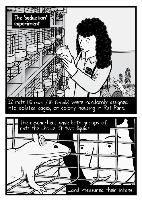 Female scientist holding lab rat drawing. Cartoon rat inside cage, researcher looking in. 32 rats (16 male / 16 female) were randomly assigned into isolated cages, or colony housing in Rat Park. The researchers gave both groups of rats the choice of two liquids...and measured their intake.