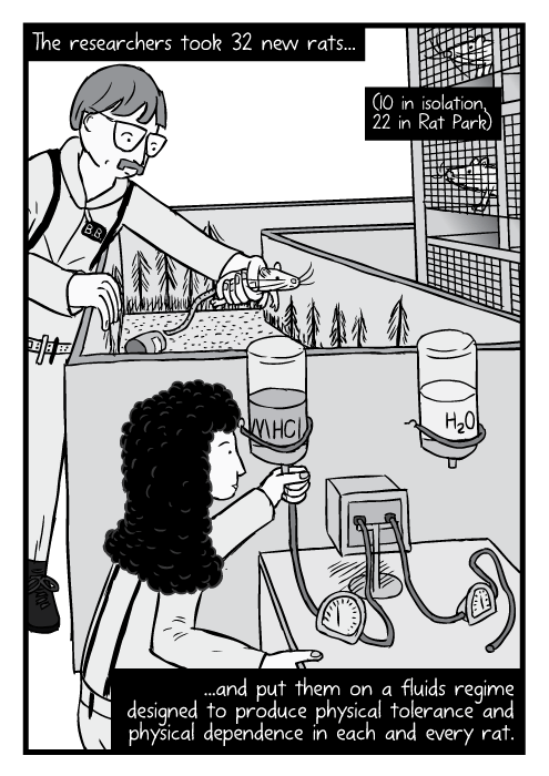 Cartoon researchers adjusting Rat Park experiment equipment. The researchers took 32 new rats...(10 in isolation, 22 in Rat Park)...and put them on a fluids regime designed to produce physical tolerance and physical dependence in each and every rat.