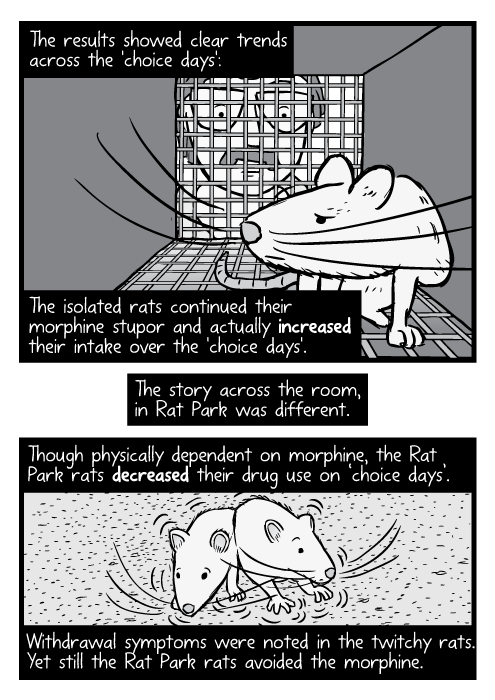 Black and white cartoon rat inside cage, researcher looking in. The results showed clear trends across the 'choice days': The isolated rats continued their morphine stupor and actually increased their intake over the 'choice days'. The story across the room, in Rat Park was different. Though physically dependent on morphine, the Rat Park rats decreased their drug use on 'choice days'. Withdrawal symptoms were noted in the twitchy rats. Yet still the Rat Park rats avoided the morphine.