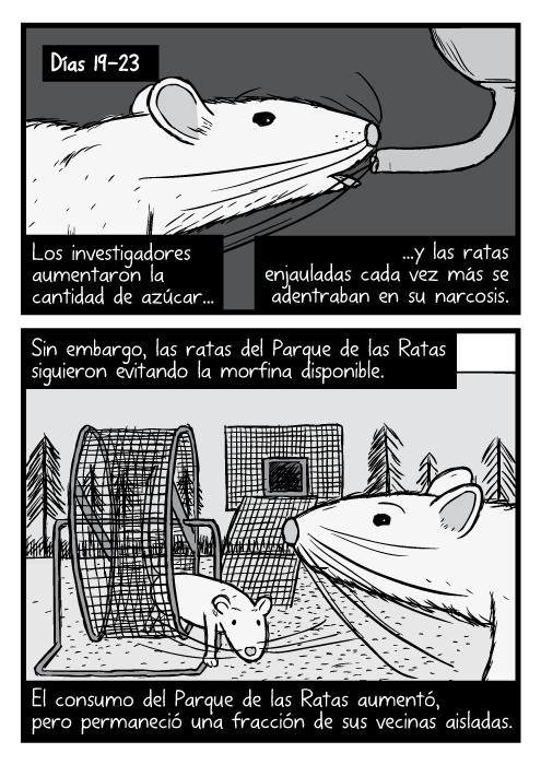 Dibujos a blanco y negro con un close-up a las ratas. Caricatura de una rueda de ejercicio para ratones en el Parque de las Ratas. Los investigadores aumentaron la cantidad de azúcar...y las ratas enjauladas cada vez más se adentraban en su narcosis. Sin embargo, las ratas del Parque de las Ratas siguieron evitando la morfina disponible. El consumo del Parque de las Ratas aumentó, pero permaneció una fracción de sus vecinas aisladas.