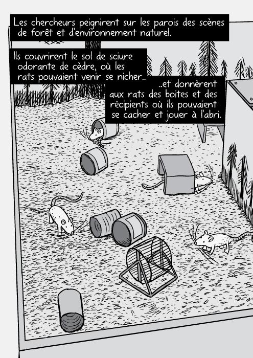 Une vue en plongée des chercheurs, du Parc et de cages de laboratoire. Les chercheurs peignirent sur les parois des scènes de forêt et d'environnement naturel. Ils couvrirent le sol de sciure odorante de cèdre, où les rats pouvaient venir se nicher. Et donnèrent aux rats des boites et des récipients où ils pouvaient se cacher et jouer à l'abri.
