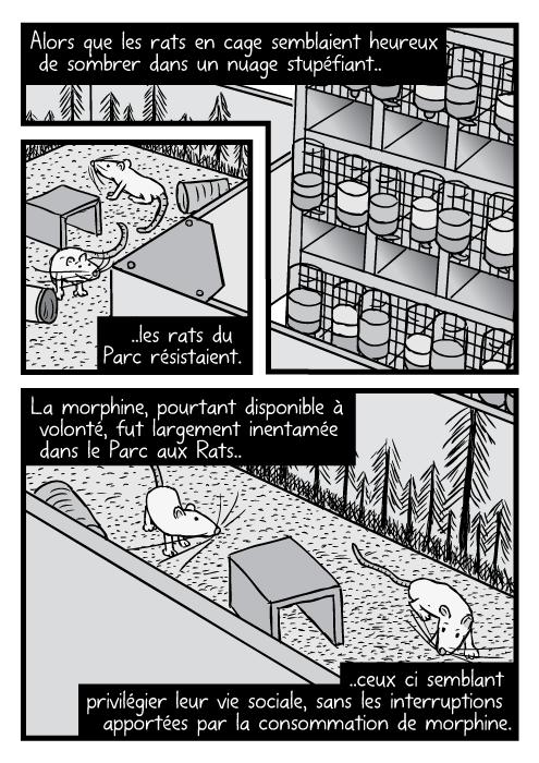 Une vue en plongée des rats (de BD) du Parc à rats et de ceux en cage. Alors que les rats en cage semblaient heureux de sombrer dans un nuage stupéfiant.. ..les rats du Parc résistaient. La morphine, pourtant disponible à volonté, fut largement inentamée dans le Parc aux Rats.. ..ceux ci semblant privilégier leur vie sociale, sans les interruptions apportées par la consommation de morphine.