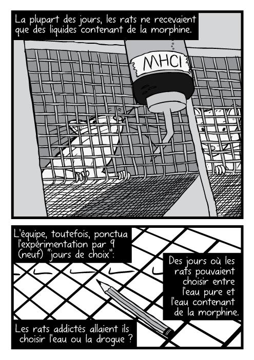 """Des rats dessinés dans des cages en treillis , en gros plan. La plupart des jours, les rats ne recevaient que des liquides contenant de la morphine. L'équipe, toutefois, ponctua l'expérimentation par 9 (neuf) """"jours de choix"""": Des jours où les rats pouvaient choisir entre l'eau pure et l'eau contenant de la morphine. Les rats addictés allaient ils choisir l'eau ou la drogue ?"""