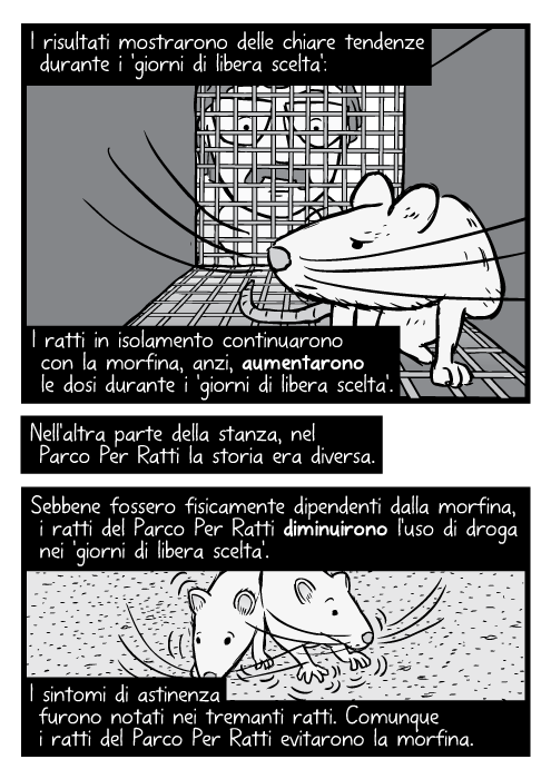 Disegno in bianco e nero di ratto dentro una gabbia, ricercatore che guarda dentro. I risultati mostrarono delle chiare tendenze durante i 'giorni di libera scelta': I ratti in isolamento continuarono con la morfina, anzi, aumentarono le dosi durante i 'giorni di libera scelta'. Nell'altra parte della stanza, nel Parco Per Ratti la storia era diversa. Sebbene fossero fisicamente dipendenti dalla morfina, i ratti del Parco Dei Ratti diminuirono l'uso di droga nei 'giorni di libera scelta'. I sintomi di astinenza furono notati nei tremanti ratti. Comunque i ratti del Parco Dei Ratti evitarono la morfina.