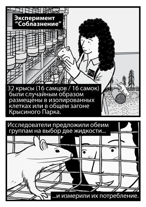 """Изображение женщины-учёного, которая держит крысу. Карикатурная крыса внутри клетки, исследователь заглядывает в неё. Эксперимент """"Соблазнение"""". 32 крысы (16 самцов / 16 самок) были случайным образом размещены в изолированных клетках или в общем загоне Крысиного Парка. Исследователи предложили обеим группам на выбор две жидкости и измерили их потребление."""