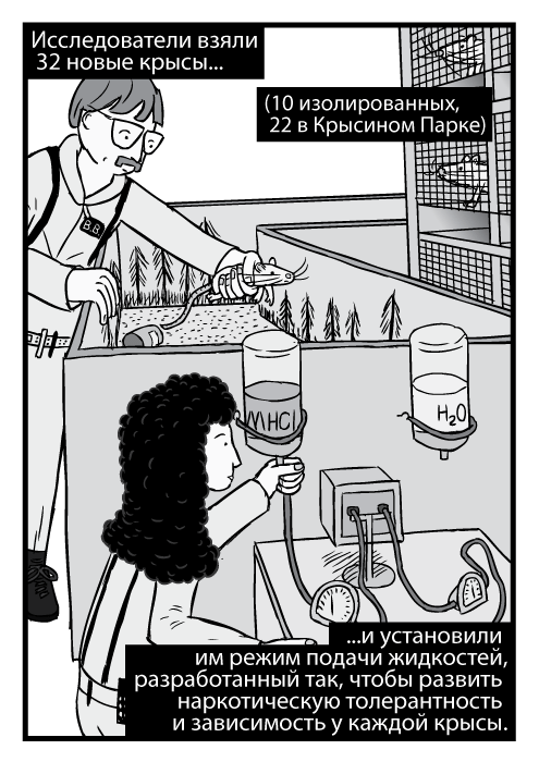 Карикатурные учёные регулируют оборудование для экспериментов в Крысином Парке. Исследователи взяли 32 новые крысы...(10 изолированных, 22 в Крысином Парке)...и установили им режим подачи жидкостей, разработанный так, чтобы развить наркотическую толерантность и зависимость у каждой крысы.