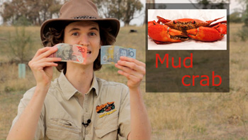 Holding an Australian $20 note - a Mud Crab. Aussie nickname for Australian currency money because of the red colour.
