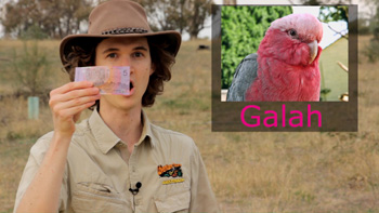 Holding an Australian $5 note - a Galah. Aussie nickname for Australian currency money because of the pink colour.