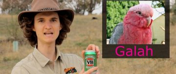 Stuart McMillen Aussie crowdfunding pitch with Akubra hat and VB beer and galah
