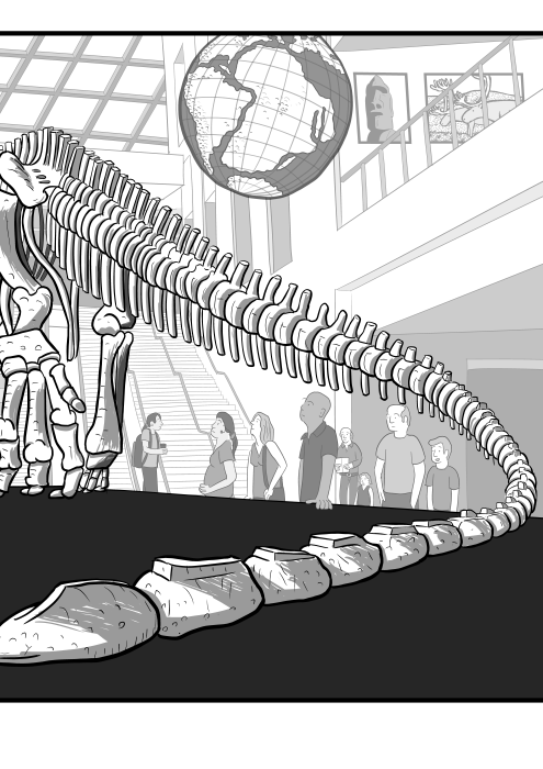 Low angle view of dinosaur skeleton tail in museum, curving away from viewer. Cartoon of dinosaur museum exhibit of fossil bones.
