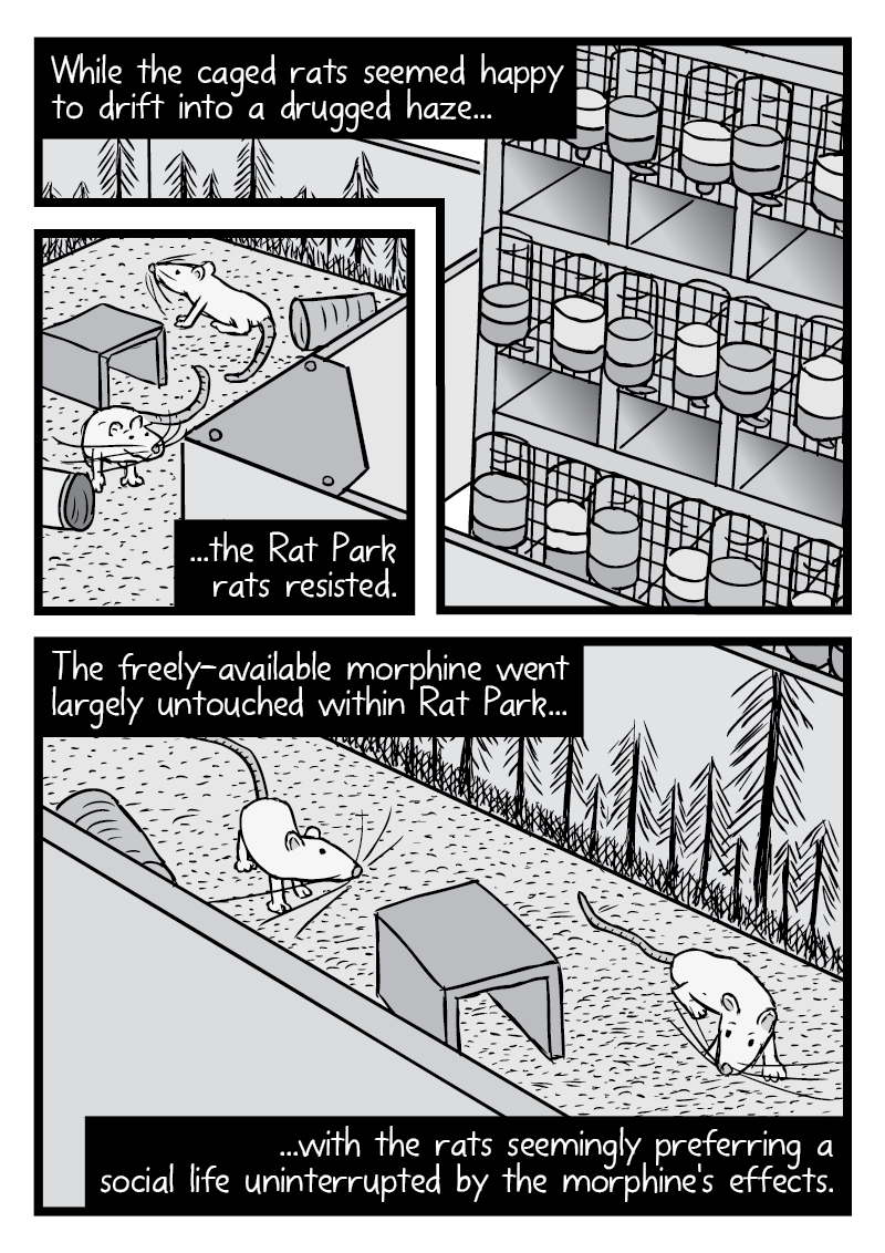 Page of artwork from Rat Park split into multiple panels. Showing the experiment in the Rat Park room.