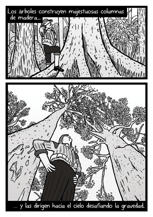 Dibujo de ángulo picado de un hombre bajo un árbol. Dibujo de troncos de árbol. Los árboles construyen majestuosas columnas de madera, y las dirigen hacia el cielo desafiando la gravedad.