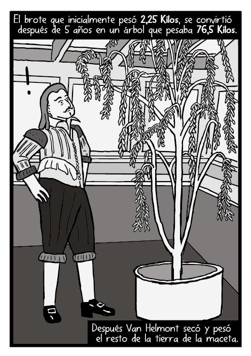 Dibujo de Jean Baptista van Helmont. Dibujo del sauce de Van Helmont. El brote que inicialmente pesó 2,25 Kilos, se convirtió después de 5 años en un árbol que pesaba 76,5 Kilos. Después Van Helmont secó y pesó el resto de la tierra de la maceta.