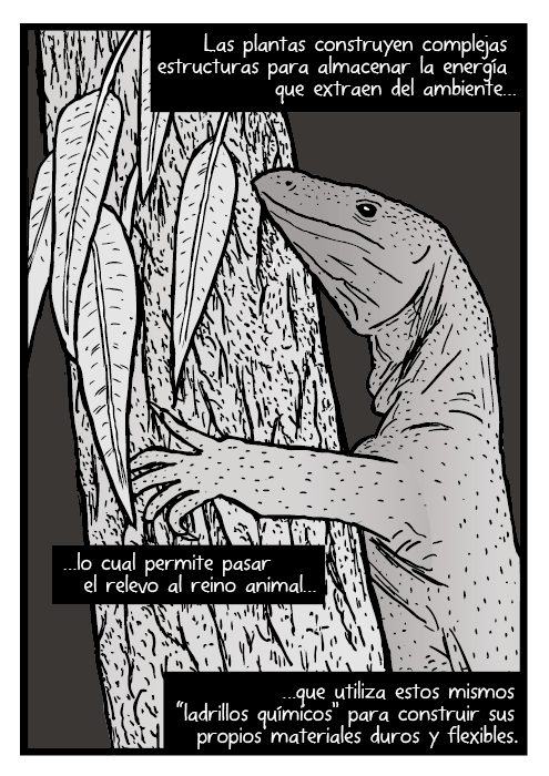 """Dibujo de goana. Dibujo Varano arborícola Lagarto en un árbol. Las plantas construyen complejas estructuras para almacenar la energía que extraen del ambiente, lo cual permite pasar el relevo al reino animal que utiliza estos mismos """"ladrillos químicos"""" para construir sus propios materiales duros y flexibles."""