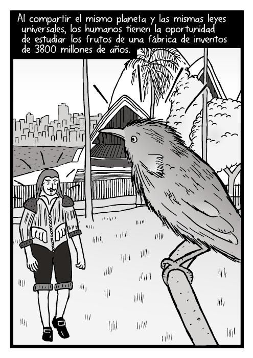 Dibujo de un ave en una rama cerca de la casa de la opera de Sídney. Dibujo de un hombre sorprendido en el puerto de Sídney. Al compartir el mismo planeta y las mismas leyes universales, los humanos tienen la oportunidad de estudiar los frutos de una fábrica de inventos de 3800 millones de años.