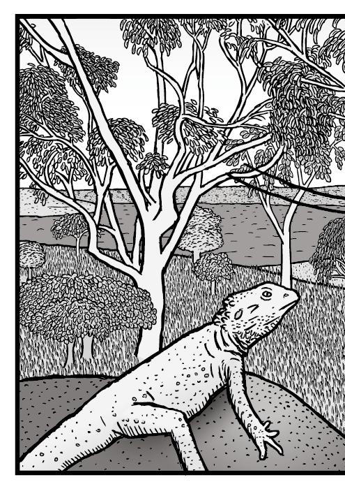 Dibujo de una escena del bosque australiano. Cómic de un eucalipto un pogona y un dacelo.