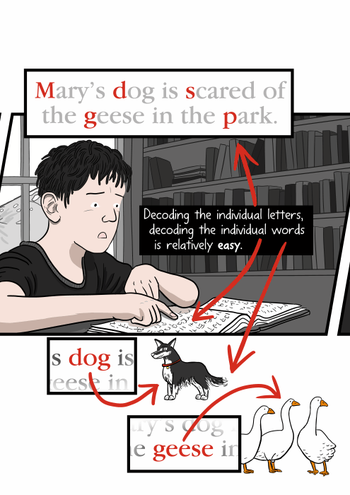 """Decoding the individual letters, decoding the individual words is relatively easy. (Boy trying to read the phrase: """"Mary's dog is scared of the geese in the park."""")"""
