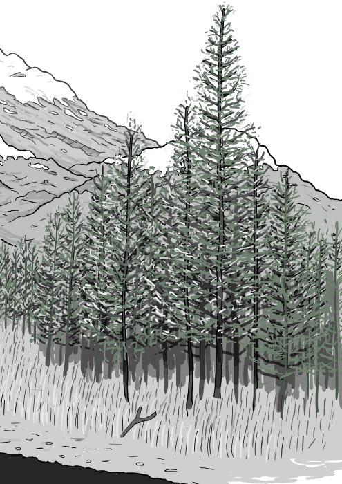 Drawing of pine forest illustrated in cartoon style, the pine trees in front of a snow-capped mountain range.