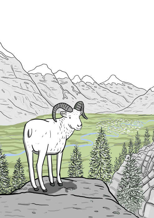 Drawing of cartoon bighorn sheep standing on a cliff, looking backwards towards viewer.